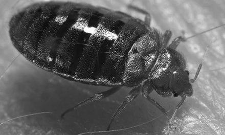 don't let the bedbugs bite by John Reinhart
