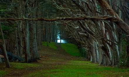 Among the Cypress Trees by Edmund Stone