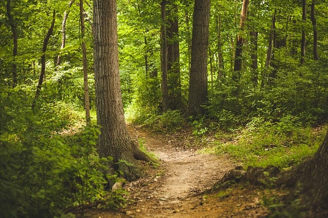 The Path by Jeff Dosser