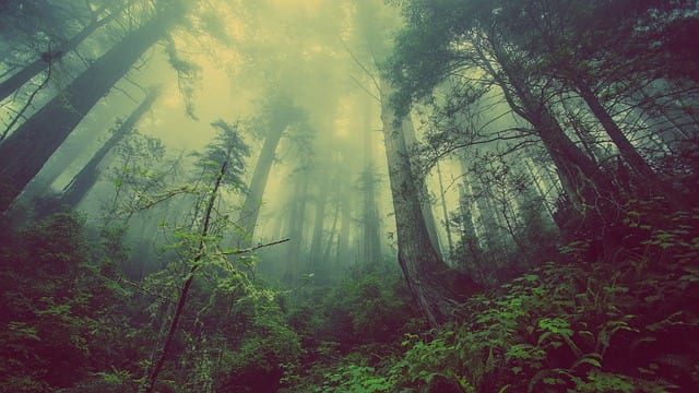 A Forest Quickening by Christine M Offutt