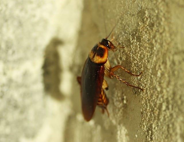 Bedbug by Luke Foster